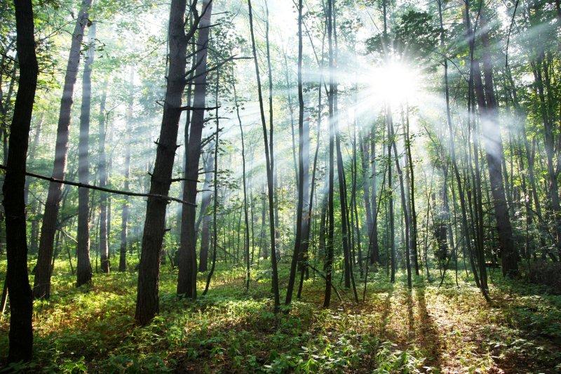 Governo abre novos apoios para o setor florestal