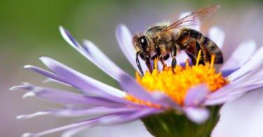 """O Parlamento Europeu propôs no início deste ano ações de """"grande escala"""" para proteger a saúde das abelhas e apoiar os apicultores europeu"""