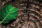 EEA quer ações concertadas de bioeconomia e economia circular para uma Europa mais sustentável