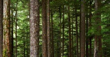 Portugueses criam robot para limpar a floresta