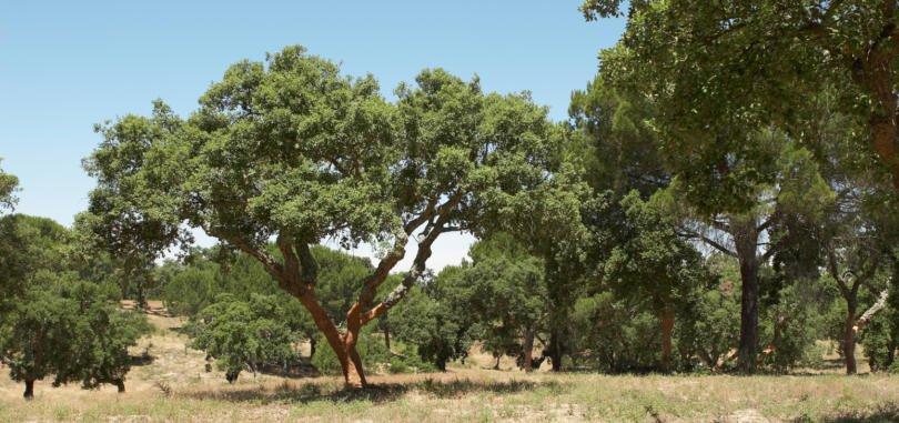 Os CTT e a associação ambientalista Quercus uniram-se para pedir aos portugueses que, ao longo dos próximos meses, ajudem a reflorestar a floresta portuguesa.