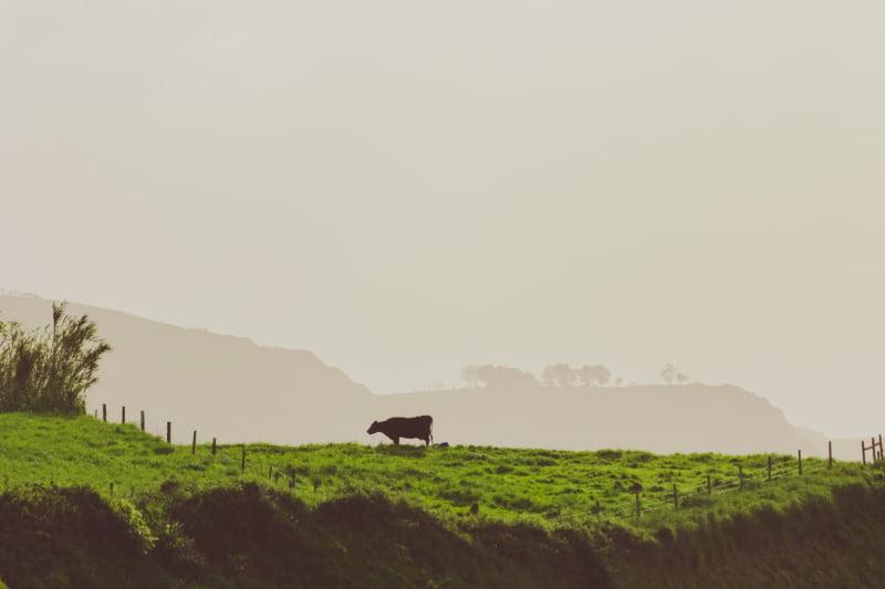 Seca: agricultores açorianos estimam prejuízos de 10 M€