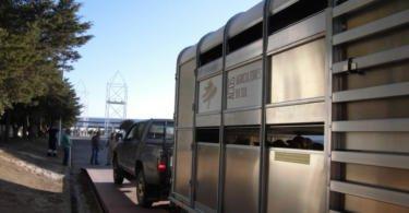 Serviço Comercial de Ovinos da ACOS exporta 9 mil ovinos num ano