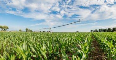 Agricultura intensiva e sustentável? Sim é possível!