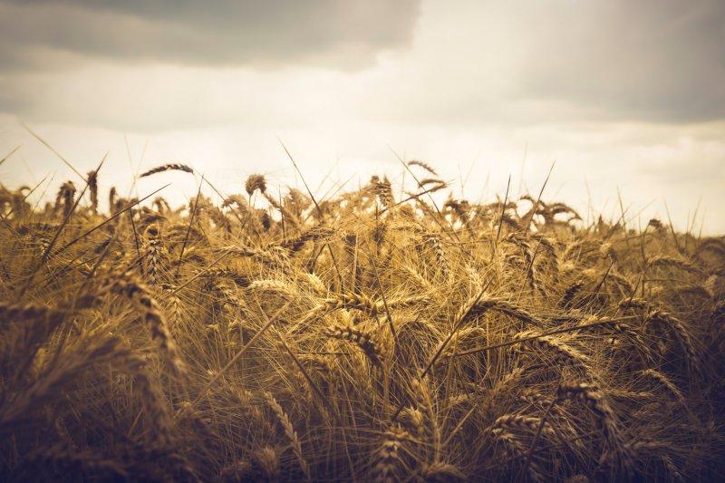 Produção alimentar terá que aumentar 70% para responder a crescimento populacional