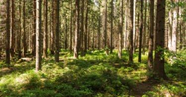 Alterações climáticas no contexto da indústria da madeira: CentroAdapt organiza formação