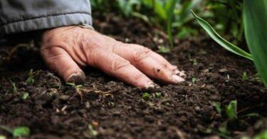 Estratégia para a agricultura familiar assinada pelo Fundo Internacional de Desenvolvimento Agrícola