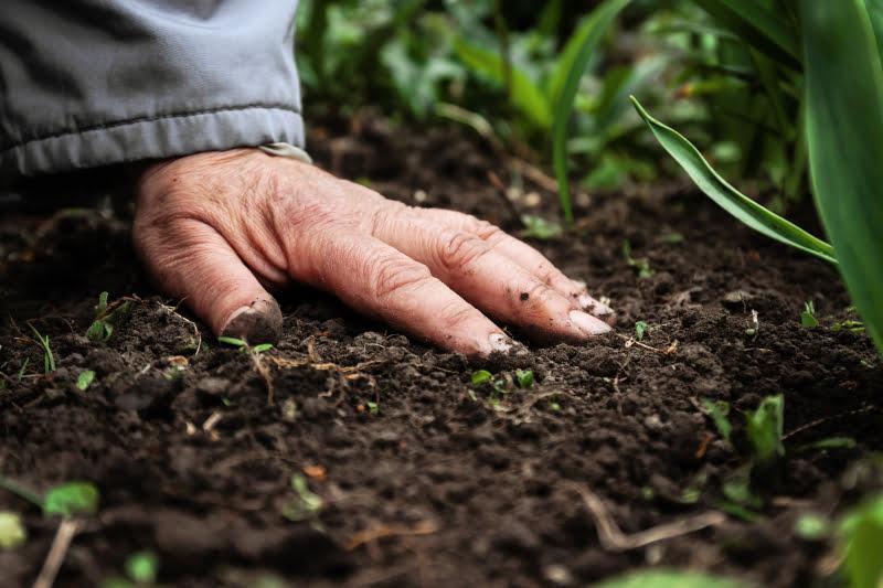 PAN pede mais apoios comunitários para a agricultura tradicional
