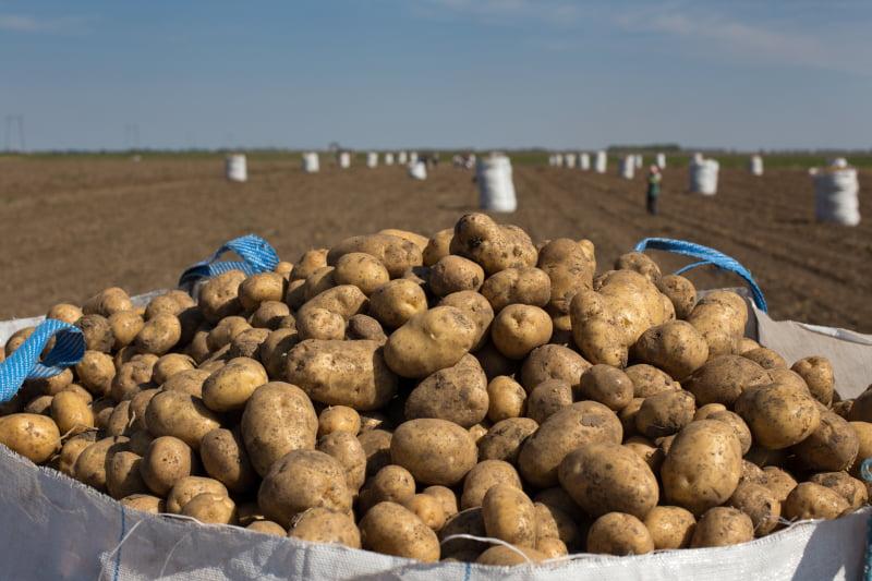 DGAV cancela autorizações de venda de herbicidas com a substância ativa diquato