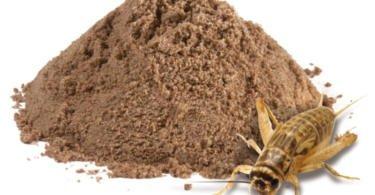 farinha de insetos nutrix