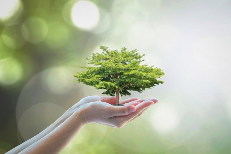 Portugal reduz pegada ecológica, mas precisa de ser mais sustentável
