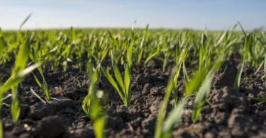 Nova estratégia europeia para a bioeconomia entra em vigor em 2019