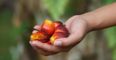 Multinacionais exigem fim do trabalho forçado na indústria do óleo de palma