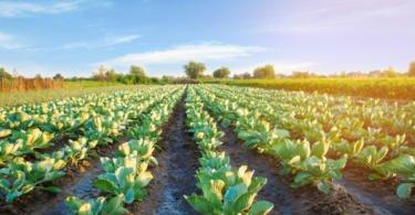 Agricultura contará com dotação de 2 mil M€ em 2019
