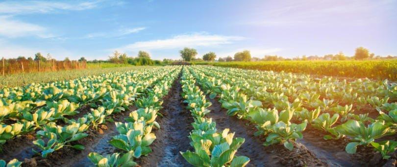 Ministério da Agricultura refuta afirmações da CAP sobre execução do PDR 2020