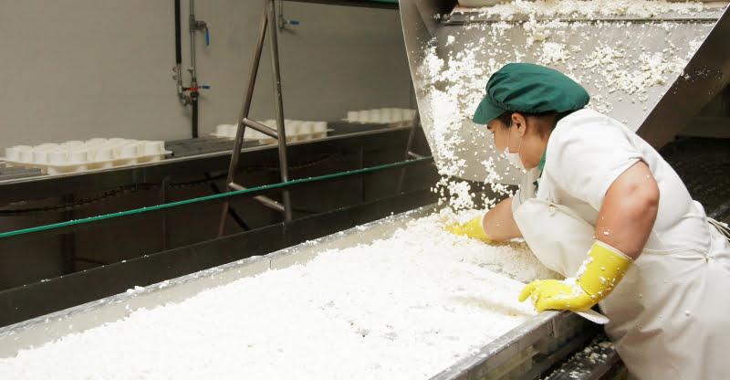 Soro do fabrico de queijo pode ser transformado em bebidas proteicas ou energéticas