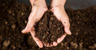 900 lisboetas aderem à compostagem em seis meses