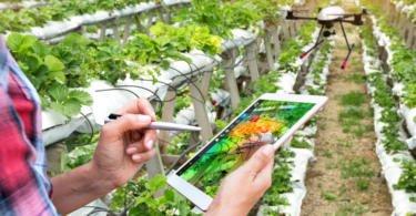 Digitalização da agricultura com potencial para criar novos postos de trabalho