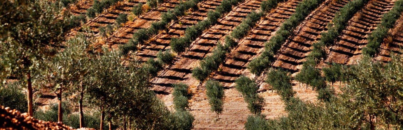 Agricultura mais sustentável, a pensar na qualidade e no mercado