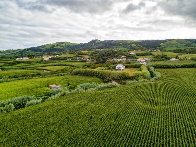 Açores já aprovou 150 candidaturas para instalação de jovens agricultores