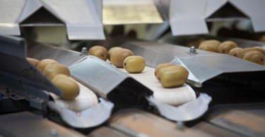 Mercadona comprou mais de 2,5 toneladas de kiwi nacional em 2018