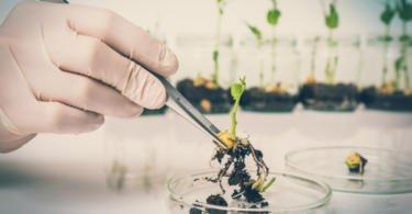 Comissão Europeia autoriza dez organismos geneticamente modificados