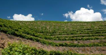 Governo alarga segSogrape às compras no Reino Unido ro vitícola de colheitas aos Açores e à Madeira