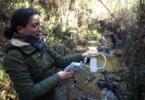 Estudo da UC avalia impacto dos eucaliptos no funcionamento dos ribeiros