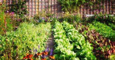 Agricultura urbana sustentável: a solução para a alimentação?