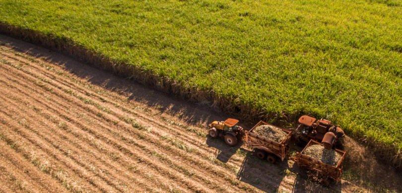 """Ministério da Agricultura: 2018 foi """"francamente positivo para o complexo agroflorestal português"""""""