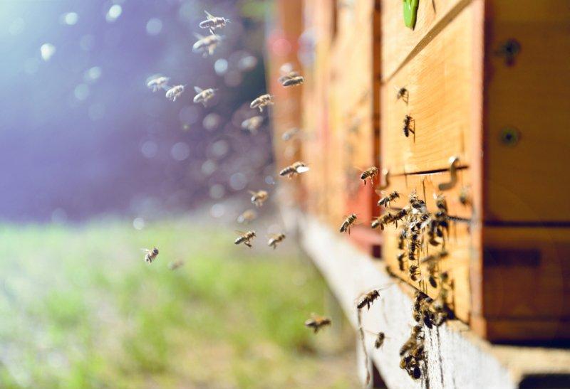 Investigadores de Leiria querem otimizar o processo de obtenção de mel em pó
