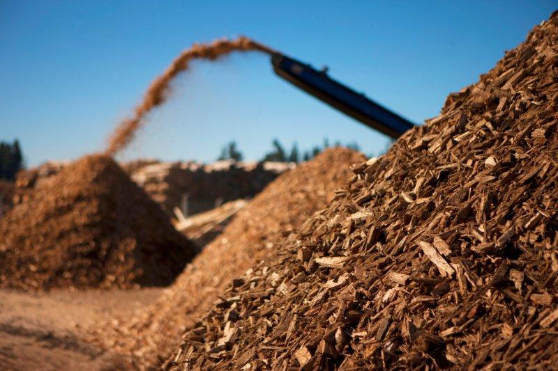 Governo tem incentivo de 320 M€ para criação de centrais de biomassa