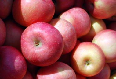 Algas podem ajudar a aumentar durabilidade de maçãs processadas
