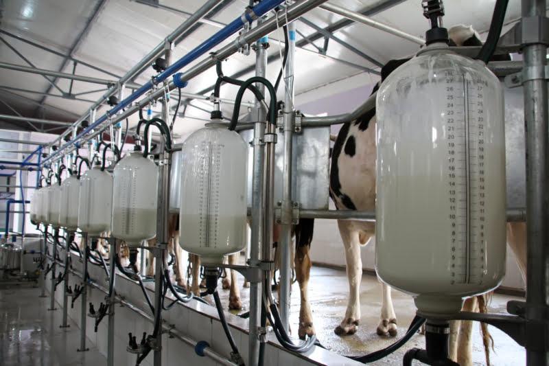 """Aprolep pede aumento do preço do leite e insta Governo a bater-se por """"mercado responsável"""""""