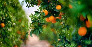 Portugal aumentou em 7% a área de cultivo de árvores de fruto
