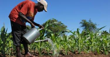 FAO quer facilitar acesso a mecanização na agricultura africana