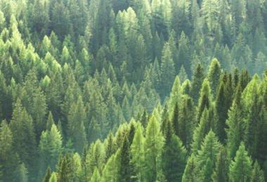 Limpar as florestas nacionais vai dar benefícios fiscais