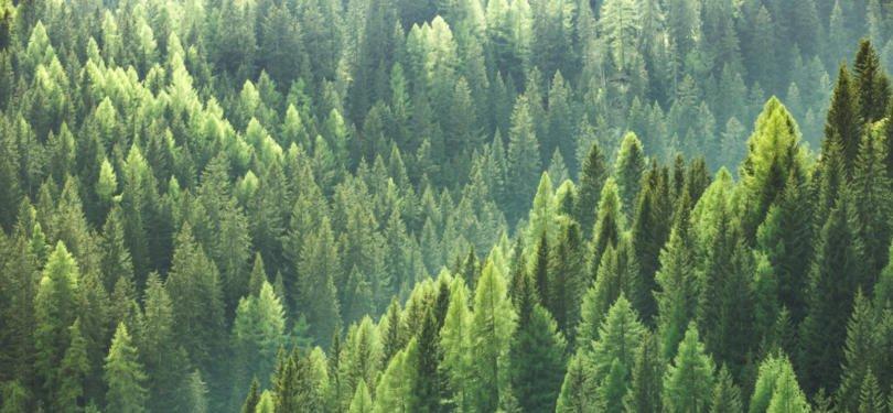 Solução Life Reforest já está a ser implementada em áreas piloto afetadas pelos incêndios