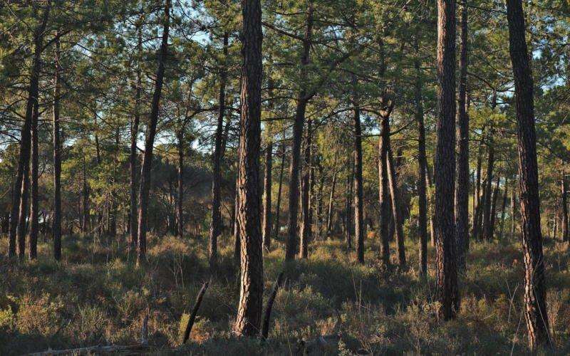 Governo disponibiliza 20 M€ em apoios para a floresta