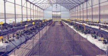 FCUP realiza debate dedicado à Investigação e Inovação no setor agrícola