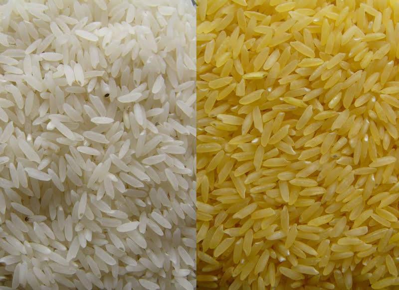 Vai começar a ser produzido arroz dourado