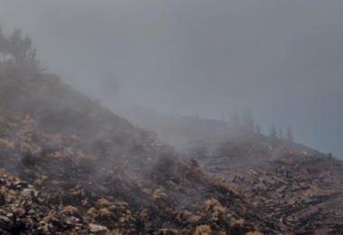 Quase 80% das árvores plantadas em zonas de incêndio morreram