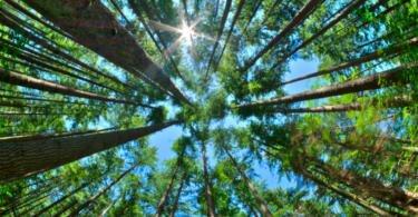 Rendimento Empresarial Líquido da silvicultura cai 3,3% em 2017