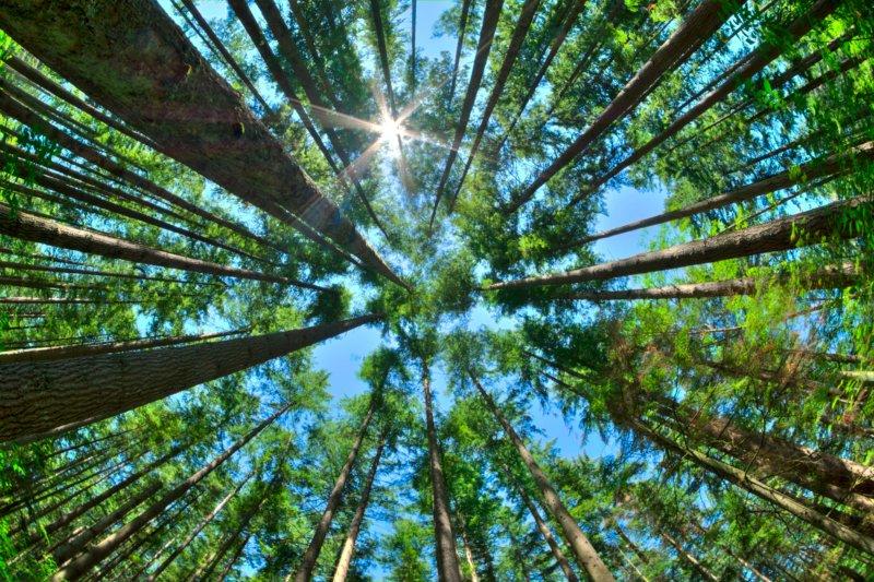 """Centro de Inovação e Competências da Floresta lembra que medidas de adaptação """"são a única forma de fazer face às alterações climáticas"""""""