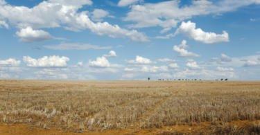 """Agricultores alentejanos """"preocupados"""" com a falta de chuva"""