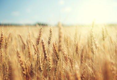 A ANPOC e a ANPROMIS vão ser recebidas pela Ministra da Agricultura, Maria do Céu Antunes, no âmbito da avaliação da implementação da ENPPC.