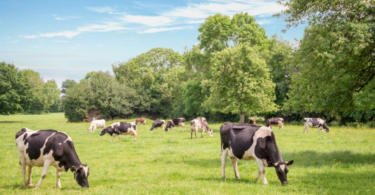 Redução de custos de produção e de emissões de CO2 são prioridades para o setor leiteiro