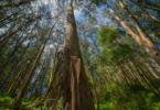 Navigator investe em Espanha para 'fugir' às restrições ao eucalipto em Portugal