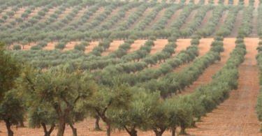 """Agricultores acusam ambientalistas de """"desinformação"""" sobre o trabalho do setor no combate às alterações climáticas"""