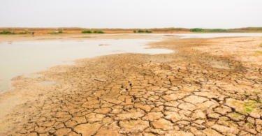 Governo disponibiliza 3 M€ em apoios para agricultores afetados pela seca